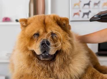 How to Keep Dog's Coat Glossy
