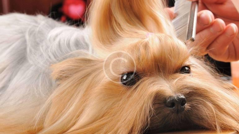 How to Make Pet Love Vet Visits